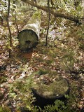 Orientation view, base of pole and felled section.