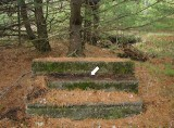 The steps stand in the middle of this wooded area.