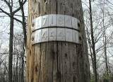 The mark is approximately 182 feet north along Route 402 from this pole (measured along the road shoulder).