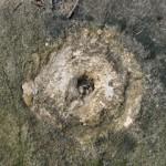 USGS Bench Mark Disk 6 JPN