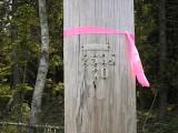 This pole, NET&T Co. 253d/70, is just a few yards E of the disk.