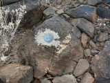 Eyelevel view of the disk set into a basalt boulder.