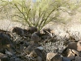 The mark is nestled among these boulders beneath a young palo verde tree.