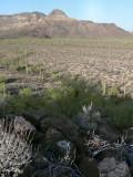 Looking NE toward the Diablo Mountains.