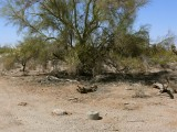 Looking W, toward the enormous palo verde tree next to the mark.