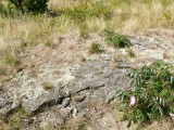 The disk is set solidly in the rock outcrop, and the fresh pink tape is evidence it has probably been visited recently.