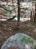 Eyelevel view of the disk set into the boulder, in a dark part of this little woods.