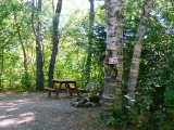 A view of campsite C20 from the road. The bolt is in the woods to the right, just a few feet from the stone fire ring.
