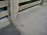 Eyelevel view of the disk set into the sidewalk.