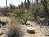 The monument is surrounded by prickly pear, cholla, and saguaro cactus.