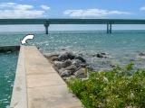 Looking S toward the new Seven Mile Bridge