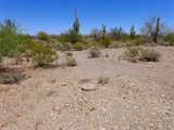 Looking N toward desert foliage!