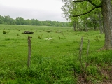 The boulder-filled pasture, surrounded by a fence.