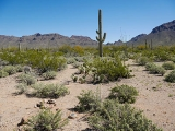 Looking NE toward Old Tucson